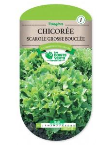 Chicorée Scarole GROSSE BOUCLEE