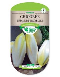 Chicorée ENDIVE DE BRUXELLES