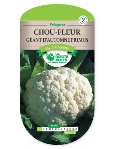 Chou-Fleur GEANT D'AUTOMNE PRIMUS