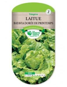 Laitue BATAVIA DOREE DE PRINTEMPS