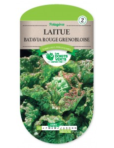 Laitue BATAVIA ROUGE GRNOBLOISE