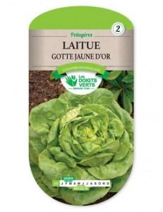 Laitue GOTTE JAUNE D'OR