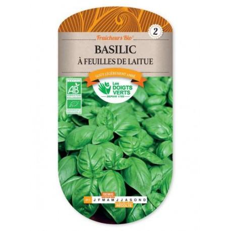 Basilic A FEUILLES DE LAITUE