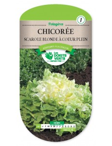 Chicorée SCAROLE BLONDE A COEUR PLEIN