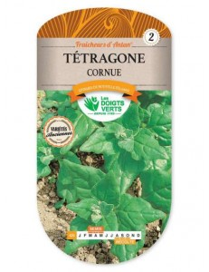Tétragone CORNUE