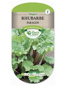 Rhubarbe PARAGON