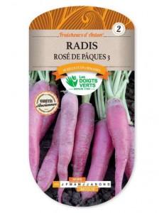 Radis ROSE DE PAQUES 3
