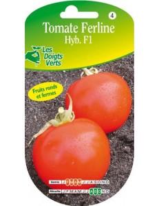 Tomate FERLINE HYB.F1