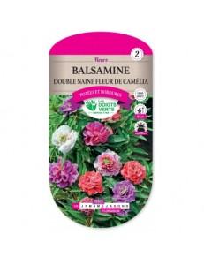 Balsamine DOUBLE NAINE FLEUR DE CAMELIA
