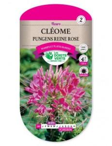 Cléome PUNGENS REINE ROSE