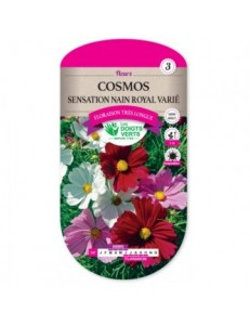 Cosmos SENSATION NAIN ROYAL VARIE