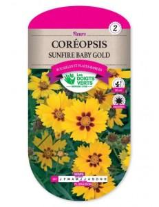 Coréopsis SUNFIRE BABY GOLD