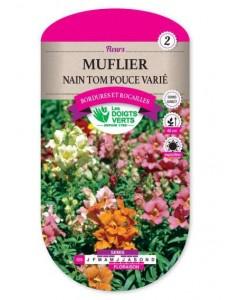Muflier NAIN TOM POUCE