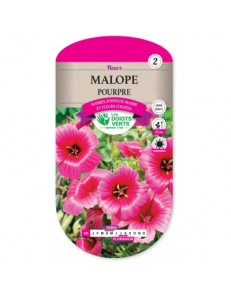 Malope POURPRE