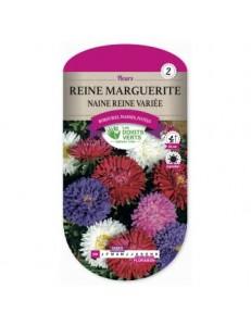 Reine marguerite NAINE REINE VARIEE