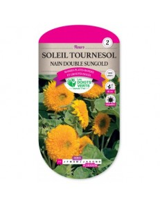 Soleil tournesol NAIN DOUBLE SUNGOLD