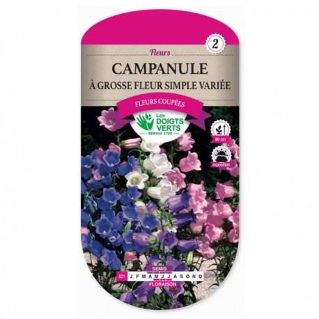 Campanule A GROSSE FLEUR SIMPLE VARIEE