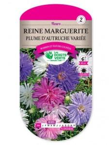 Reine marguerite PLUME D'AUTRUCHE VARIEE