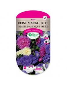 Reine marguerite BEAUTE D'AMERIQUE VARIEE