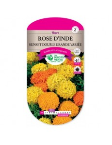 Rose d'Inde SUNSET DOUBLE GRANDE VARIEE