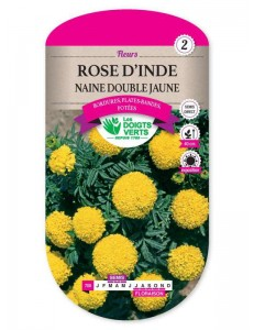 Rose d'Inde NAINE DOUBLE JAUNE