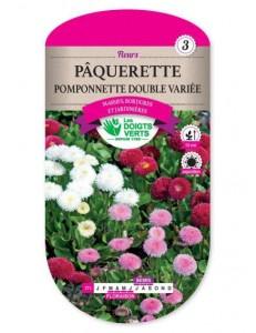Pâquerette POMPONNETTE DOUBLE VARIEE