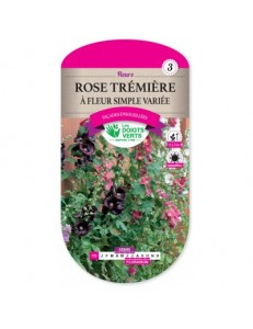 Rose trémière A FLEUR SIMPLE VARIEE