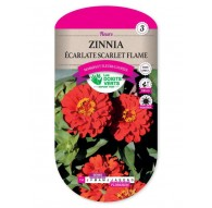 Zinnia ECARLATE SCARLET FLAME
