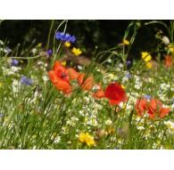 Semences Florales