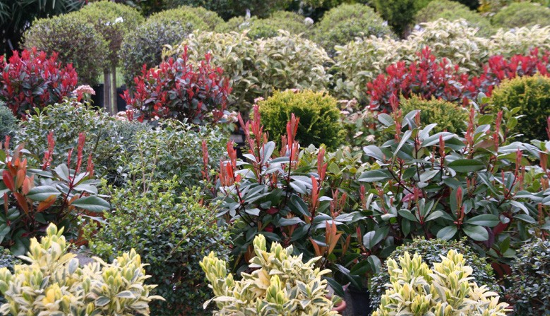 Plantes & Végétaux